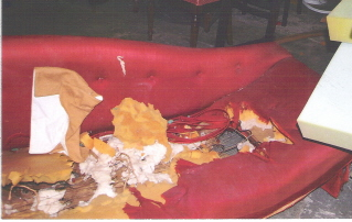 The couch, before