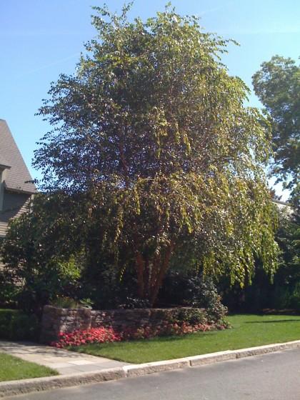 heritage cullen birch