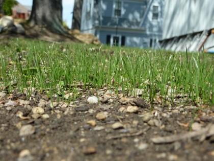 grass | day 21