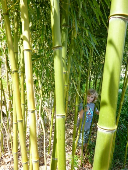 bamboo closeup