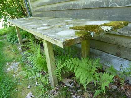 mossy bench
