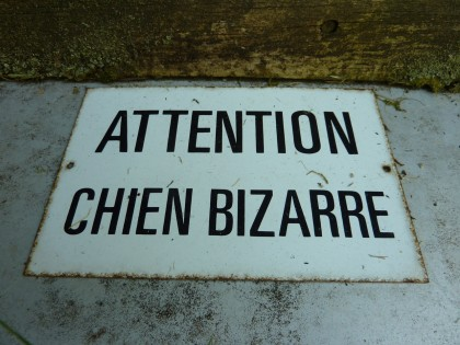 chien bizarre