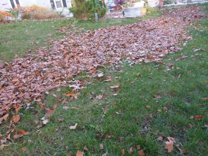 mow over it several times, til leaves are chopped
