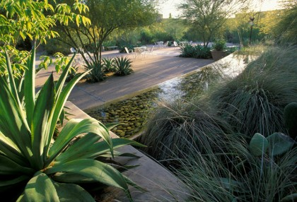 desert botanic garden pool by ten eyck landscape architects | teneyeckla.com