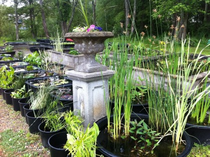 tons o' water plants