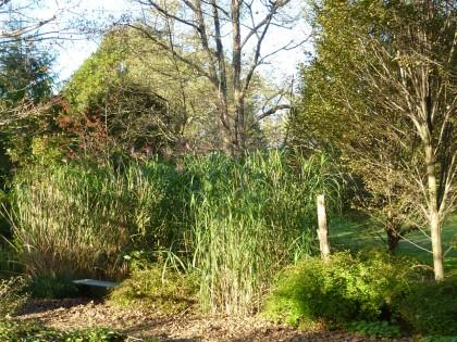 brine garden bench in giganteus