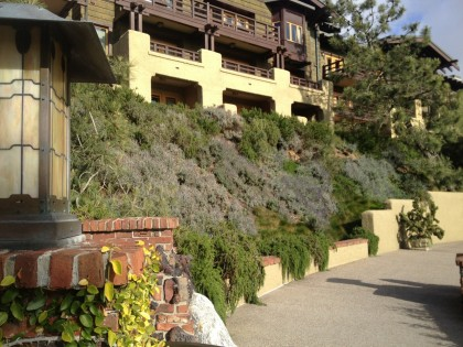 sunny hillside at Lodge Torrey Pines, La Jolla: rosemary and lavendar