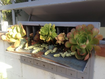 Los Feliz neighborhood, L.A.: succulents in a mailbox!