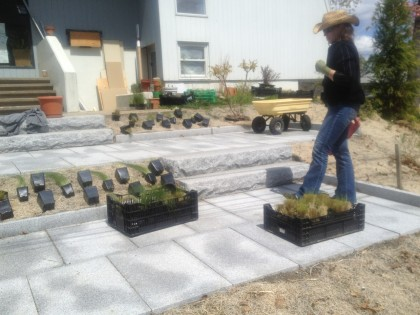 hillside planting: laying out the plants