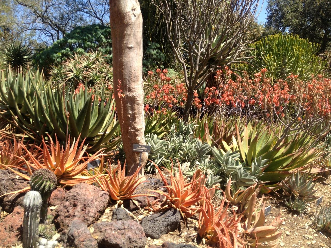 the desert garden at huntington « mod remod