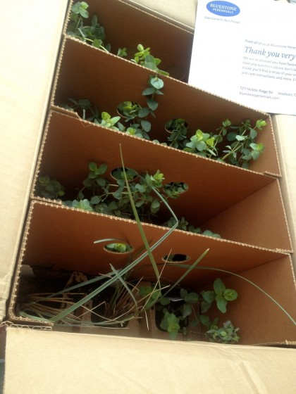 live plants begin arriving!
