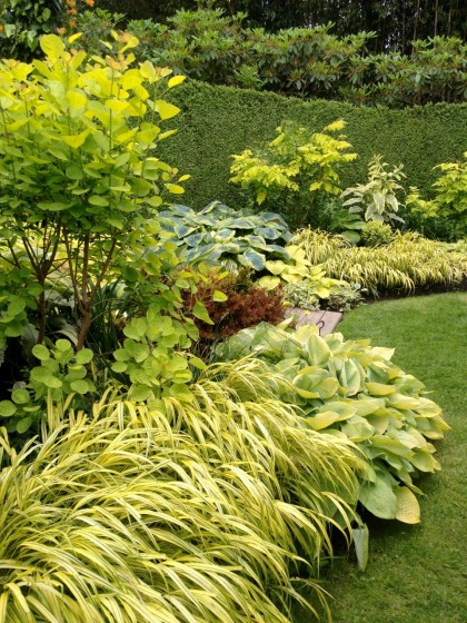 this garden room is all about screaming yellow foliage, like cotinus 'golden spirit' and hakonechloa 'all gold'