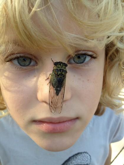 cicada proboscis