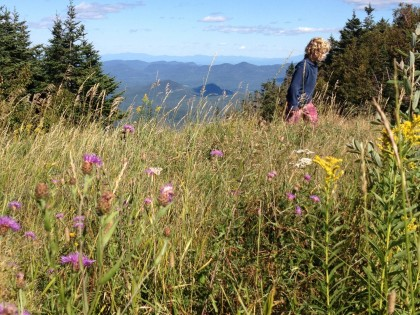 tramping through the wildflowers